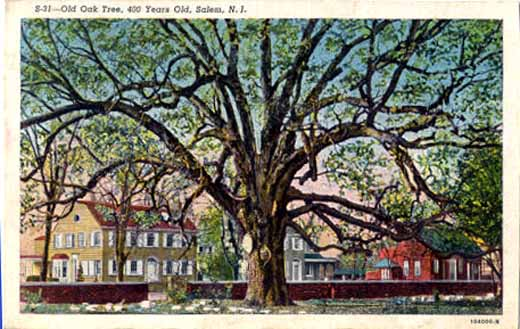 Postcard of the Salem Oak